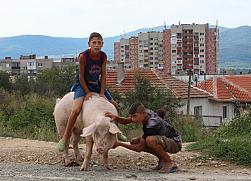 За вредата от програмите за роми